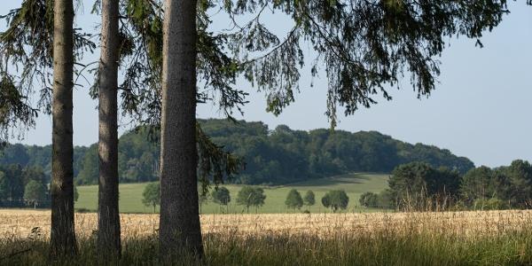 Felder und Tannenwälder