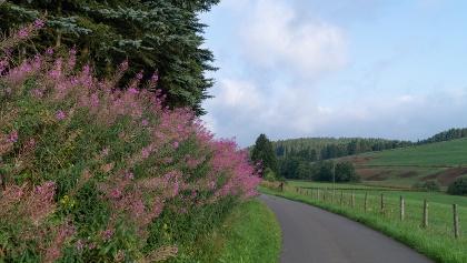 Wildblumen entlang des Weges