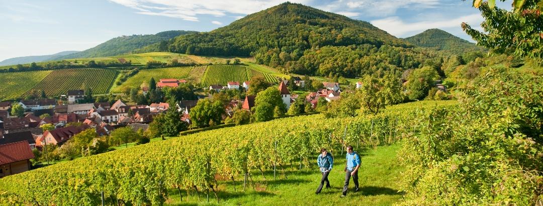 Pfälzer Weinsteig bei Leinsweiler