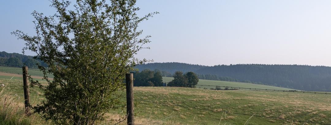 Weiden und Wälder