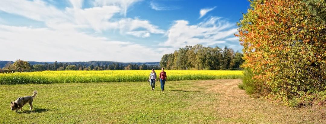 Die Landschaft in Neubulach genießen