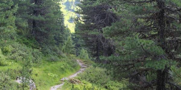 Zirmweg zur Lizumer Hütte