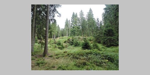 Pfaffenstein nahe Schneckenstein