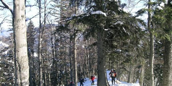 Aufstieg über den lichten Waldrücken zum Großen Königskogel