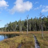 Teerisuo-Lososuo, Kuhmo Finland