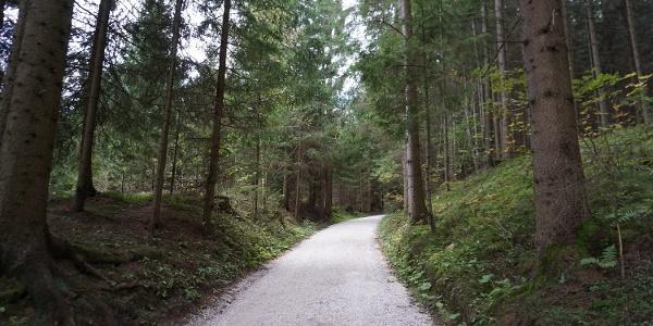 Breiter Schotterweg durch den Wald