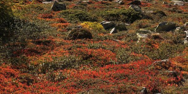 Herbst im Dösener Tal