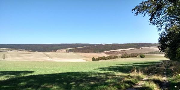 Blick Richtung Sack im Dürreherbst 2019