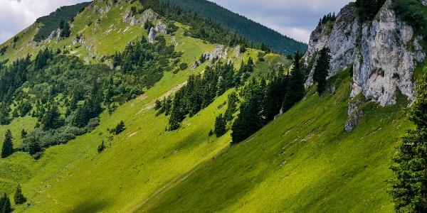 Die grüne Steiermark in den Mürzsteger Alpen