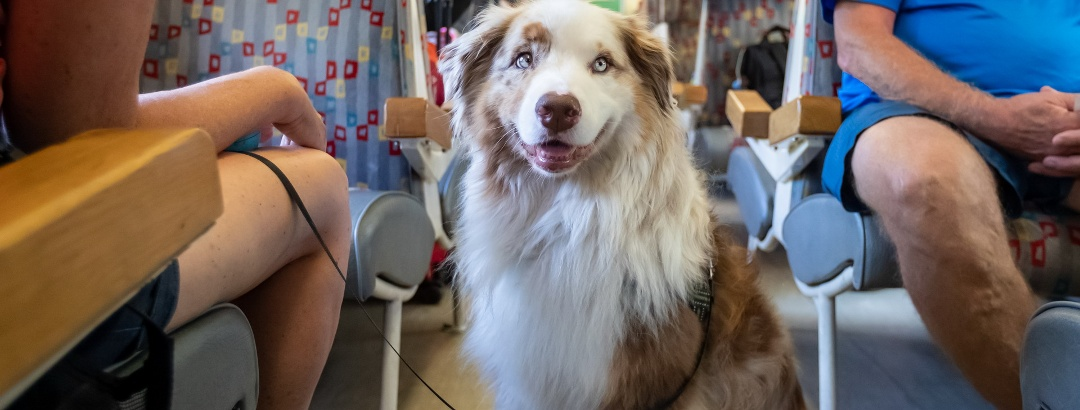 Rides with train on Bohinj Railway, dogs welcome
