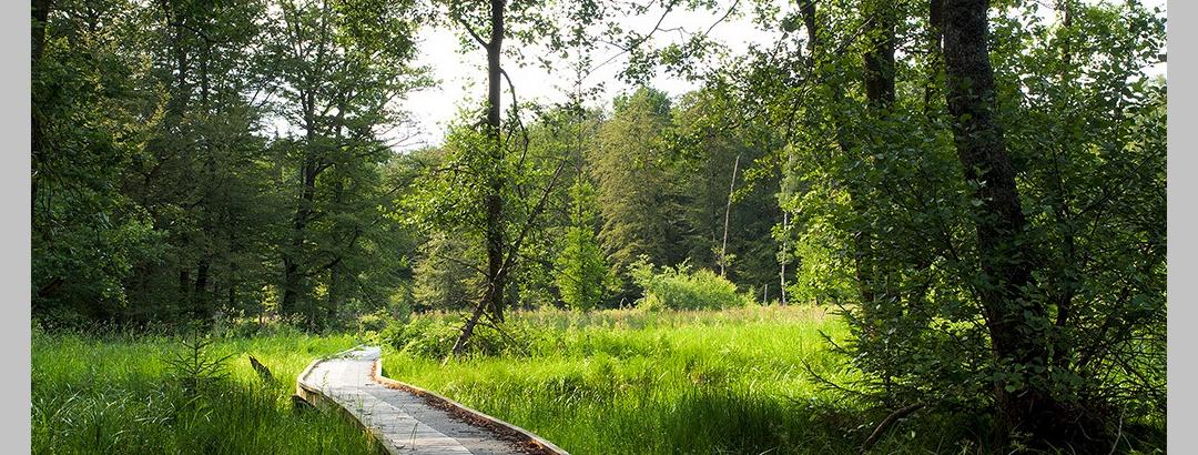 Bohlenstege führen durch den Wald
