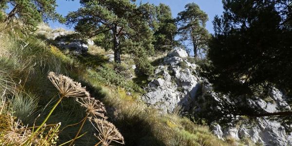 Mediterrane Vegetation an den Südhängen des Baus de la Frema