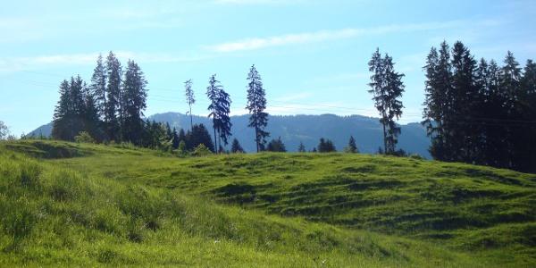 Weg zwischen Aumühle und Maderhalm