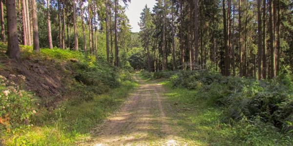 Wittekindsweg
