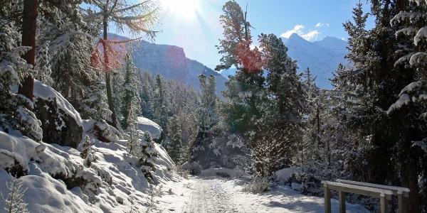 Verschneiter Wald in Grächen.