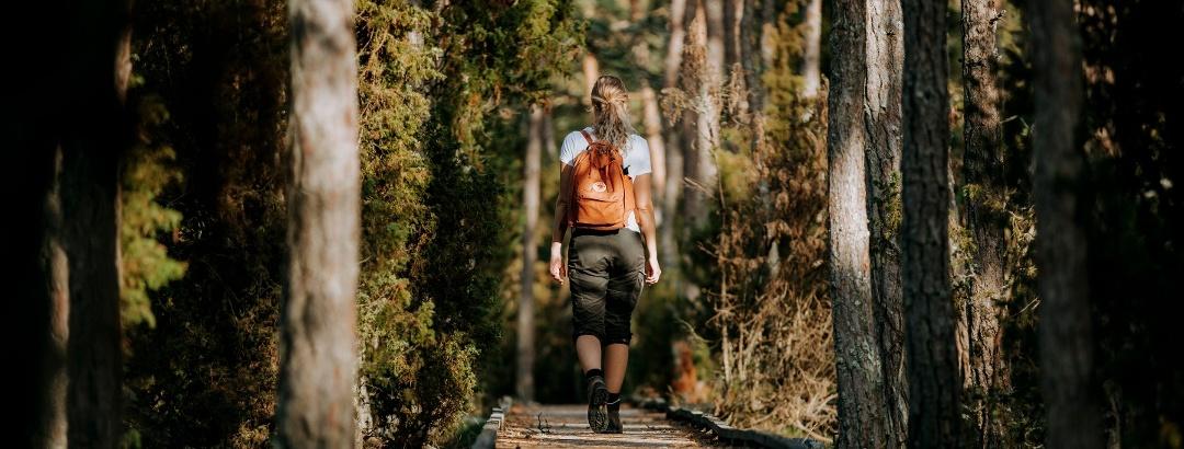 Wandern in Trollskogen