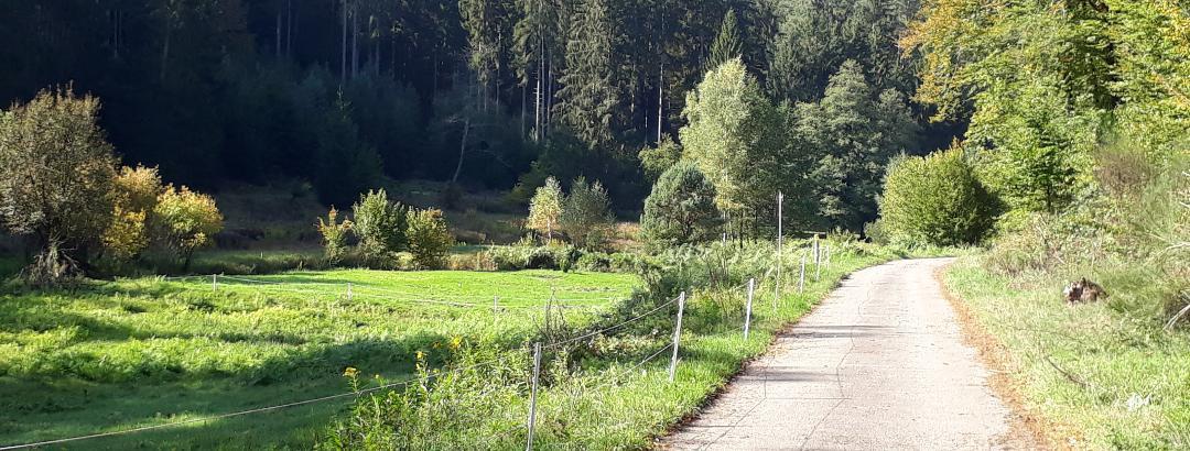 Im Woogbachtal