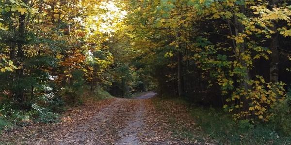 Forstweg Richtung Füssen