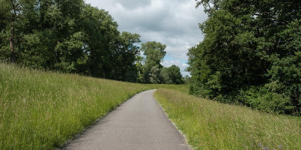entlang des Rheinradweges