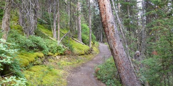 Auf dem Trail.