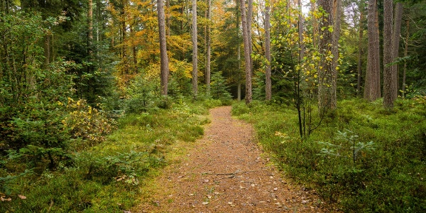 Auf mal schmalen Pfaden, mal Schotterwegen geht es oft durch dichten Wald