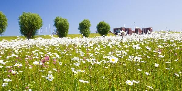 Blumenwiese Horumersiel