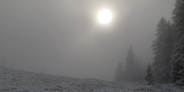 Nebel am Herrenboden