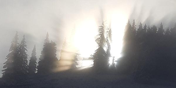 Sonne im Nebel hinter den Bäumen