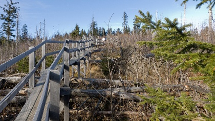 גשרי העץ הצרים