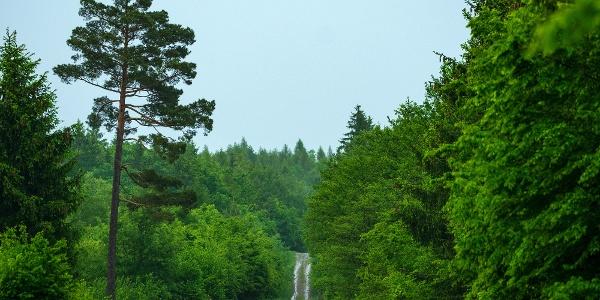 A Vasfüggöny turistaút (Z jelzés) mucki szakasza