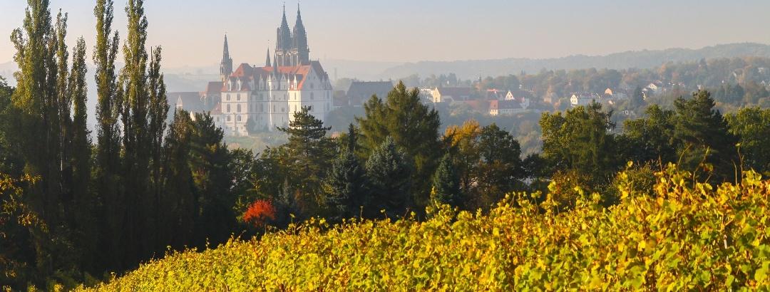 Herbststimmung am Weinberg