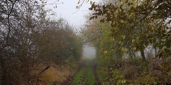 Wanderweg in Richtung Kindelberg