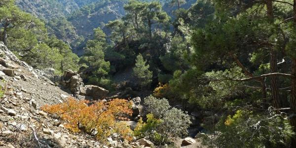 Herbst im Tal des oberen Karkotis Flusses