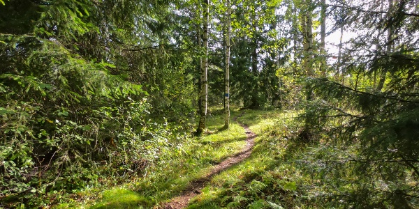 A path, part of the Bergö hiking trail