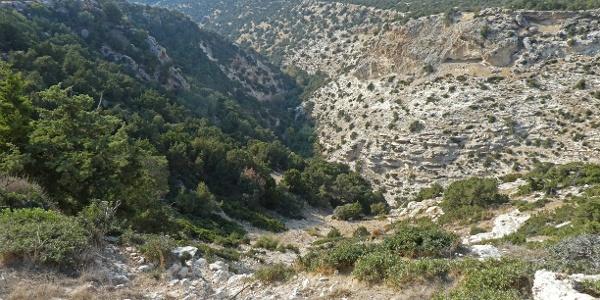 Blick in die Avakas-Schlucht von oben