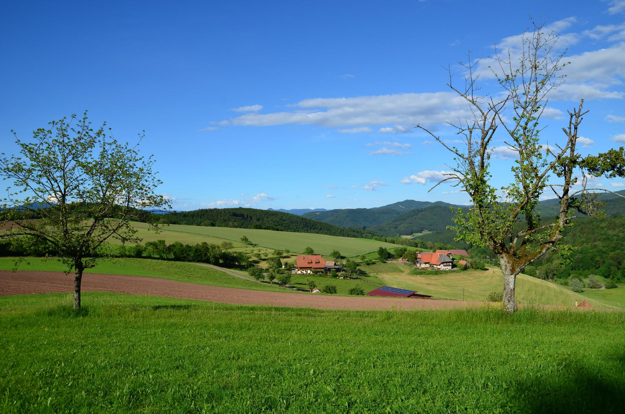 Aussicht auf den Flachenberg