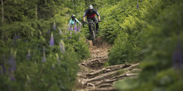 Wurzeln und Steine für richtige Downhill Cracks
