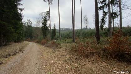 Gieseler Forst
