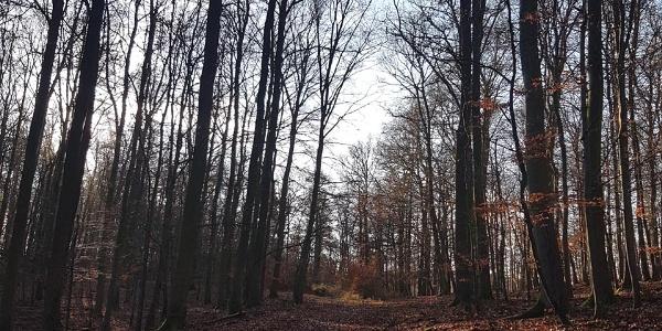 Wanderweg am Daudenberg ( 465m ü.NN )