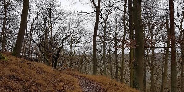Wald-Wander-Pfad am Daudenberg / Ederhöhenweg