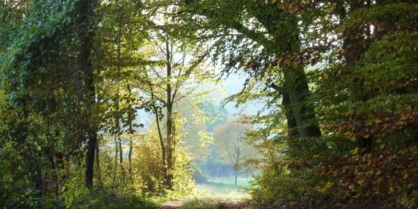 Reinhäuser Wald