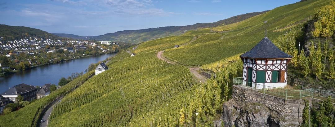 Vineyards next to Bernkastel-Kues