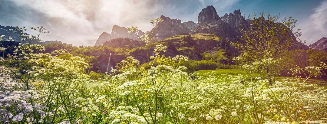Loèche-les-Bains avec champ et montagnes