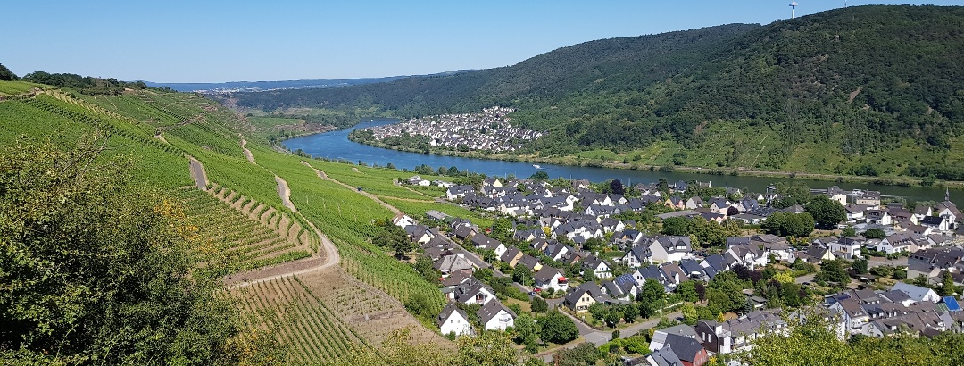 Wanderung auf dem Traumpfädchen Moseltraum - Blick auf die Weinberge und die Mosel bei Winningen