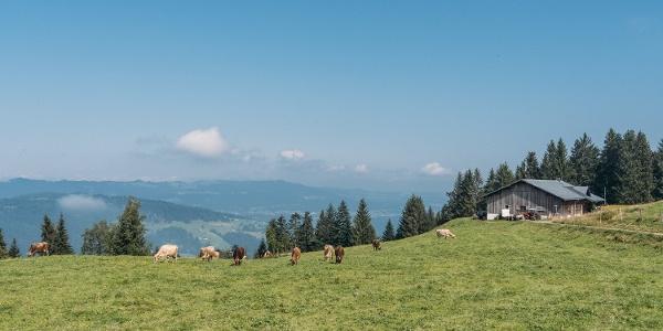 Breitentobelalpe (c) Packyourthingsandtravel / Vorarlberg Tourismus