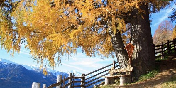 """Sentiero per """"Terrainkur"""" n. 5 - Parcines – sentiero panoramico Monte Sole - Naturno"""