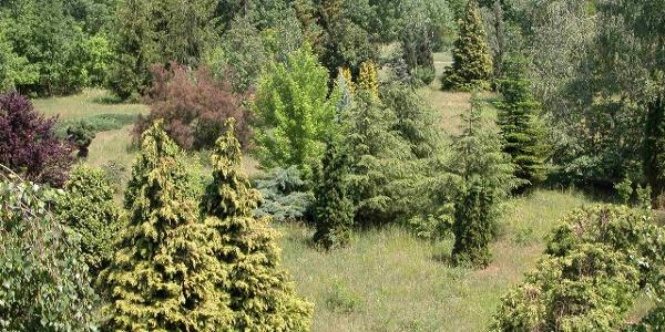 Püspökladányi Arborétum