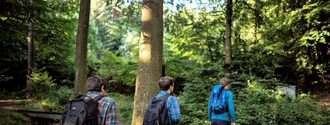 Wanderer im Pfälzerwald