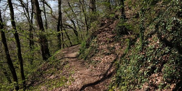 Naturpfad am Rosenegg