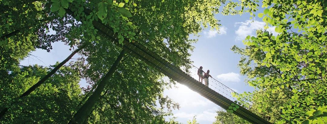 Hängebrücke am Rothaarsteig bei Kühhude